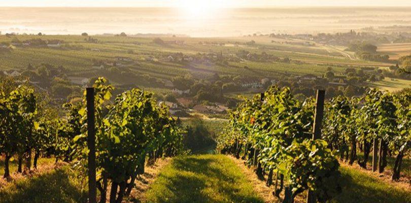 Il Burgenland, un terroir vinicolo tutto da scoprire